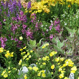 Greystone Gardens